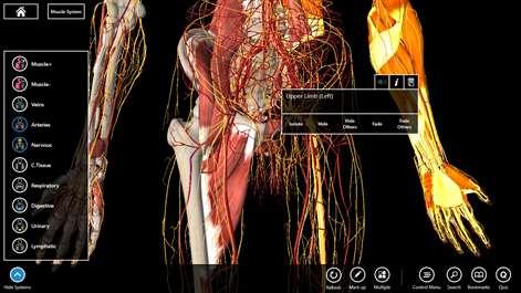 Essential Anatomy 3 3.3.2.0 Crack + Serial Key Updated (Mac) Download